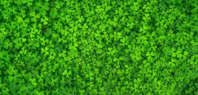 leaf-nature-green-spring-artifical-leaf