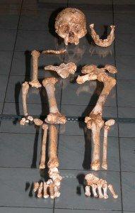 LB1 skeleton Figure 3