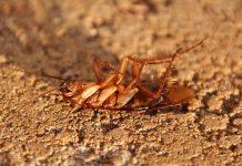 pest-control-home-tips