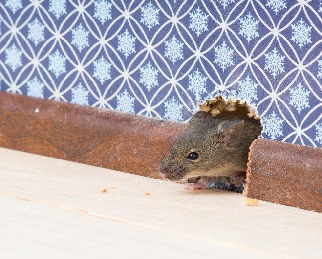 pest control services redmond