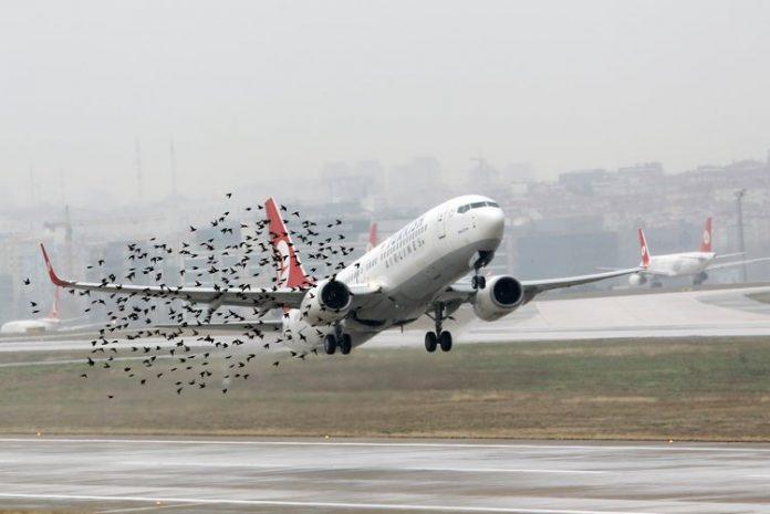 airplanr bird strike
