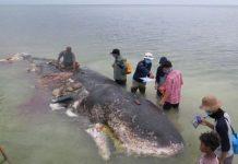 dead whale marine pollution