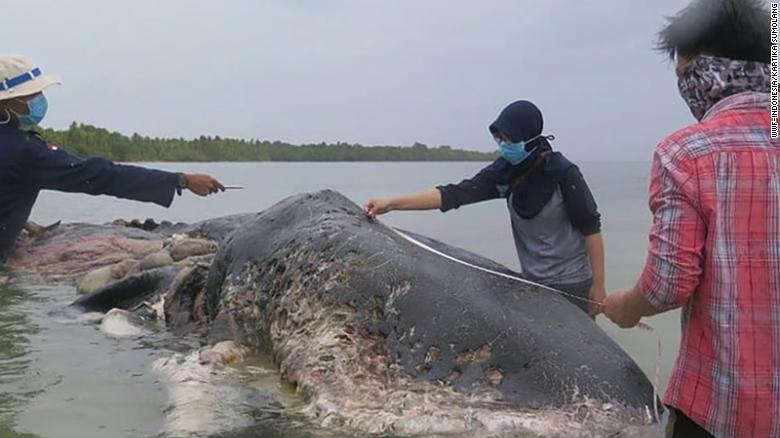 indonesia-whale-dead-plastic