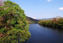 odisha river tree