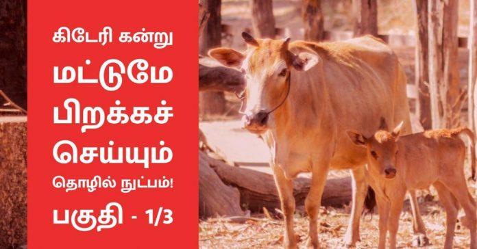 tech-to-produce-female-calves-milk-production