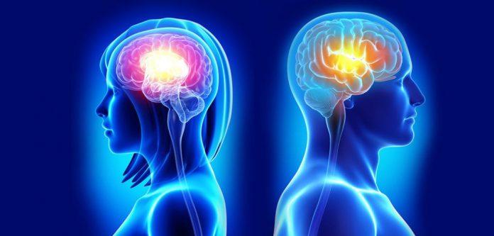 brain_activity_women