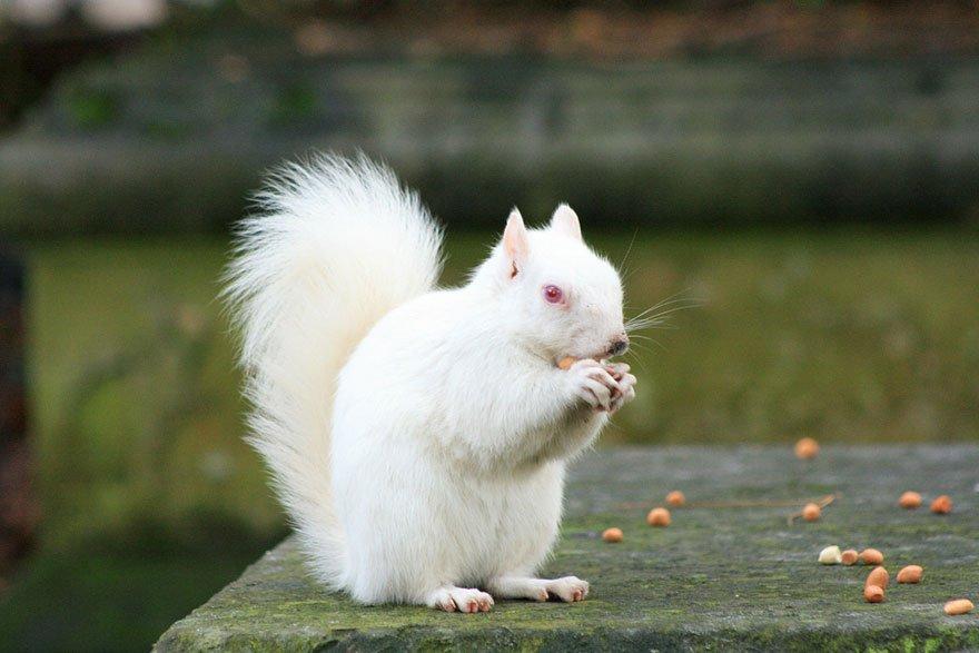 white animals 2
