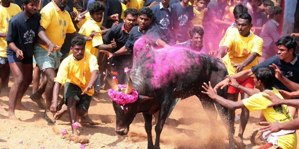 Jallikattu-Tradition-festival-Tamil-Nadu-in-south-india-1024x512