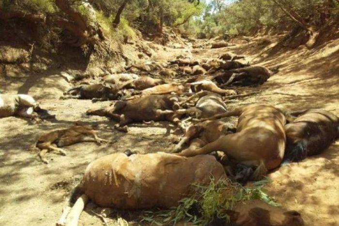 horses dead