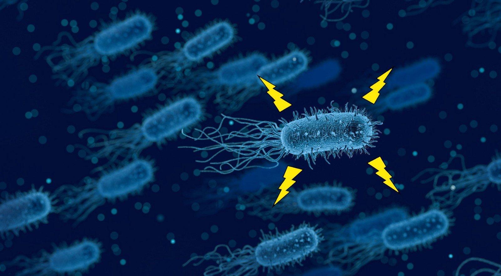 bacteria produce electricity