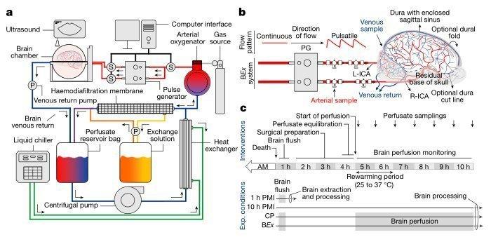 brainex schematic