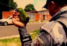 parrot-arrested-drug-dealers-police-raid-brazil-