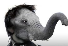 The-Elephant-Man-