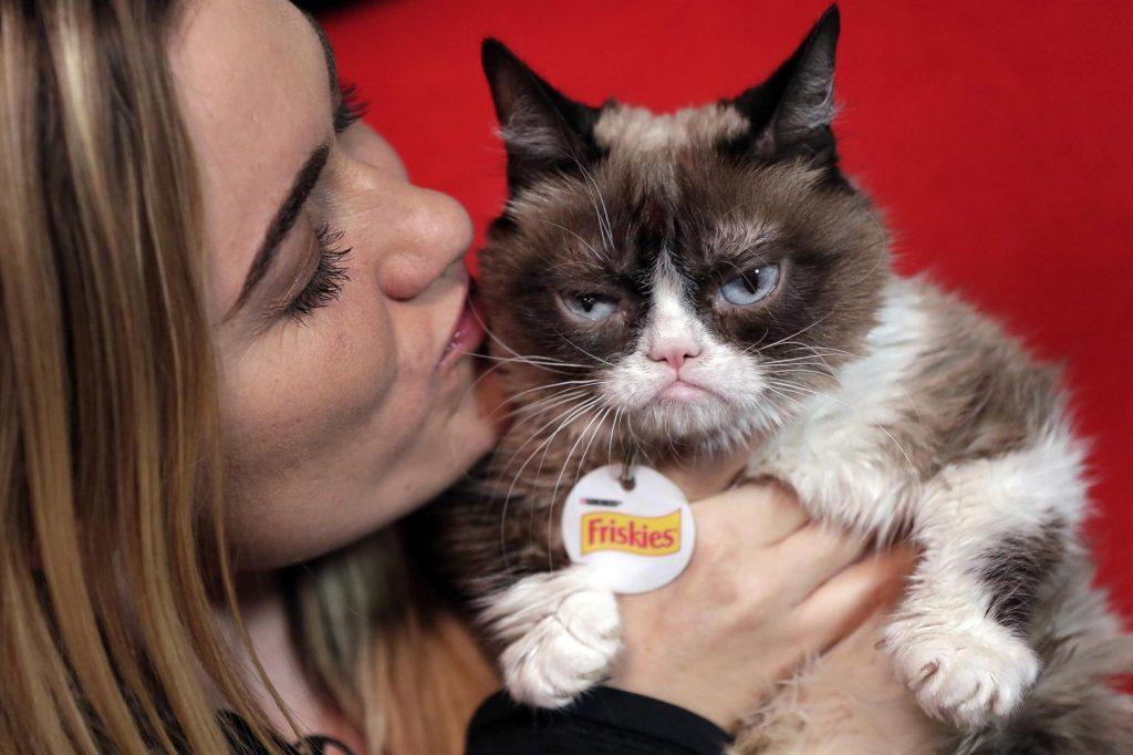 grumby cat
