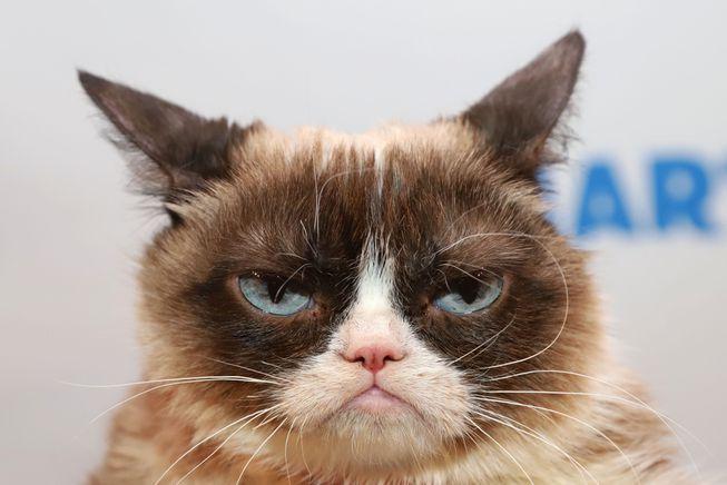 grumpy_cat.jpg.