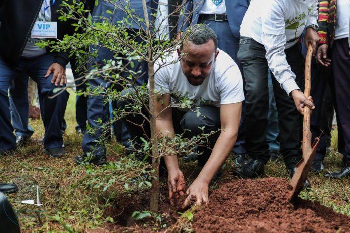 Abiy-planting-trees