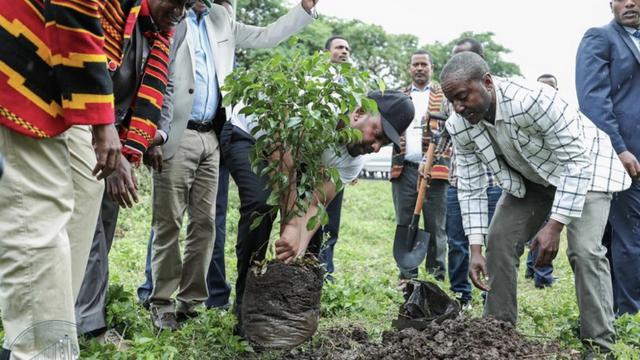 ethiopia_trees_0729