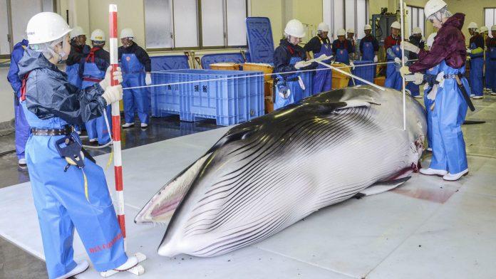 whale japan