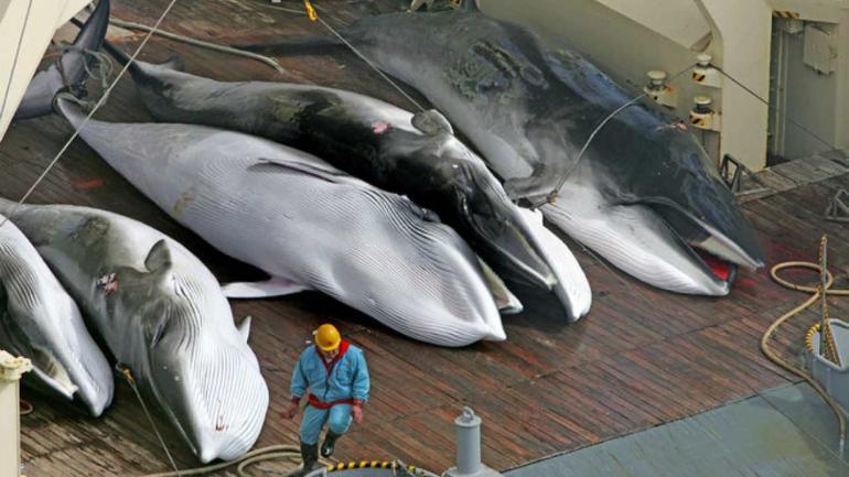 whale_