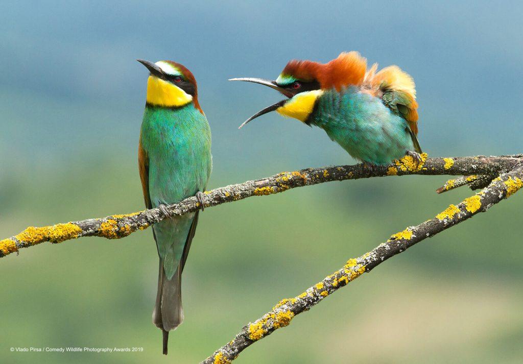 Comedy Wild Life Photography Awards Angry Birds