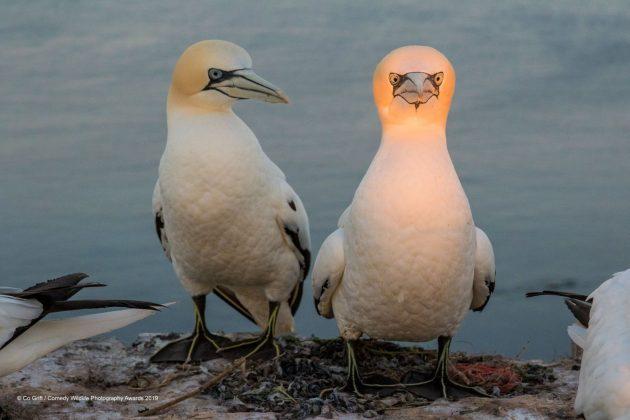Comedy Wild Life Photography Awards Angry Birds2