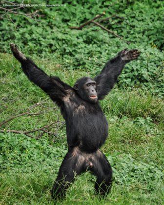 Comedy Wild Life Photography Awards Monkey 2