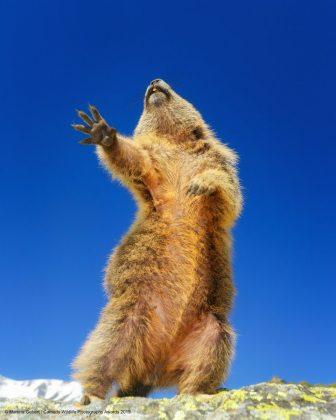 Comedy Wild Life Photography Awards Rat