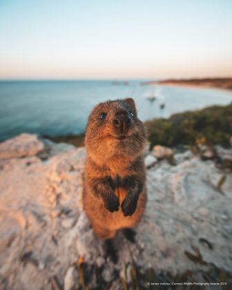Comedy Wild Life Photography Awards Rat Selfie