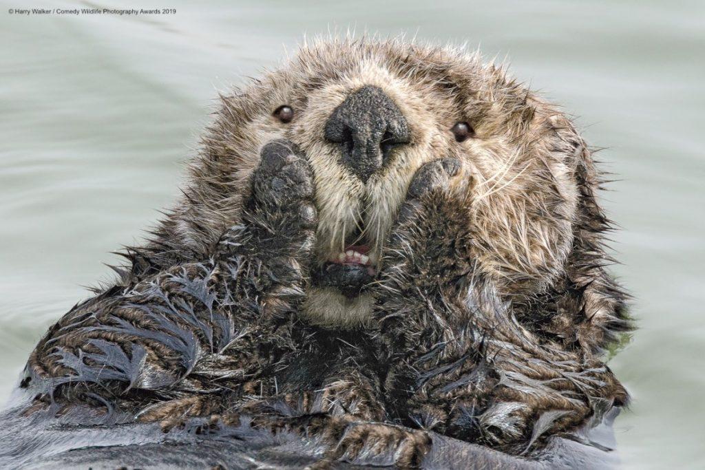 Comedy Wild Life Photography Awards Sloth