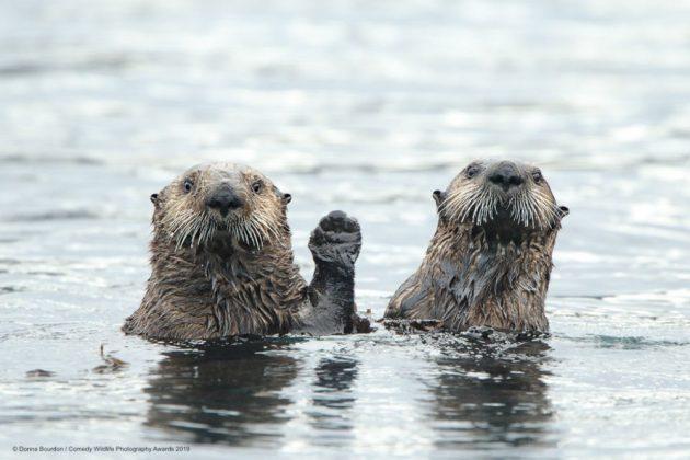 Comedy Wild Life Photography Awards Sloths