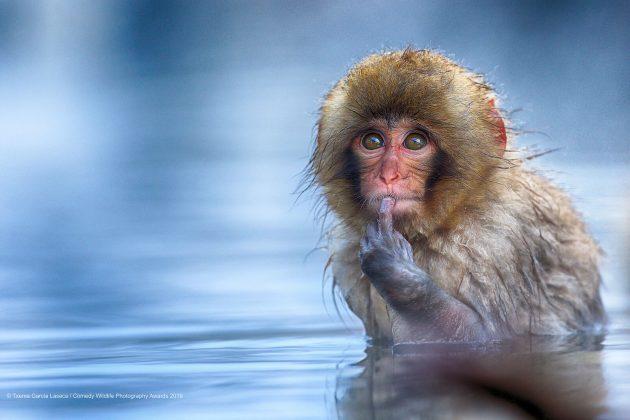 Comedy Wild Life Photography Awards Thinking Monkey