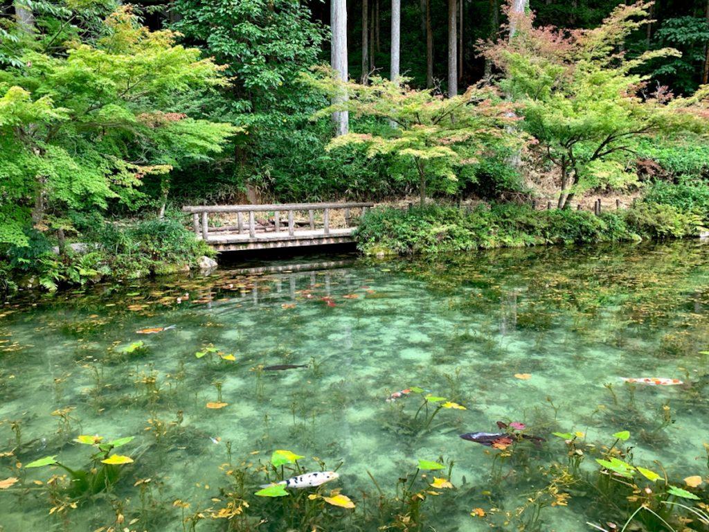 monets pond gifu japan 10