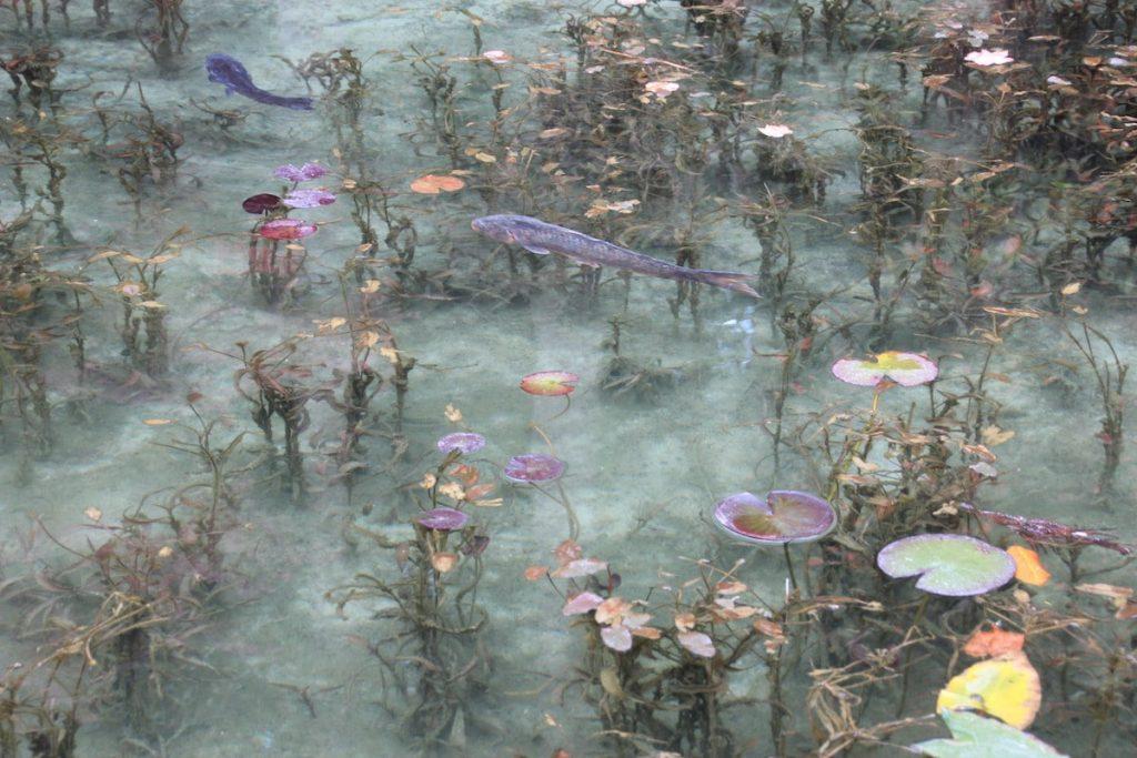 monets pond gifu japan 4