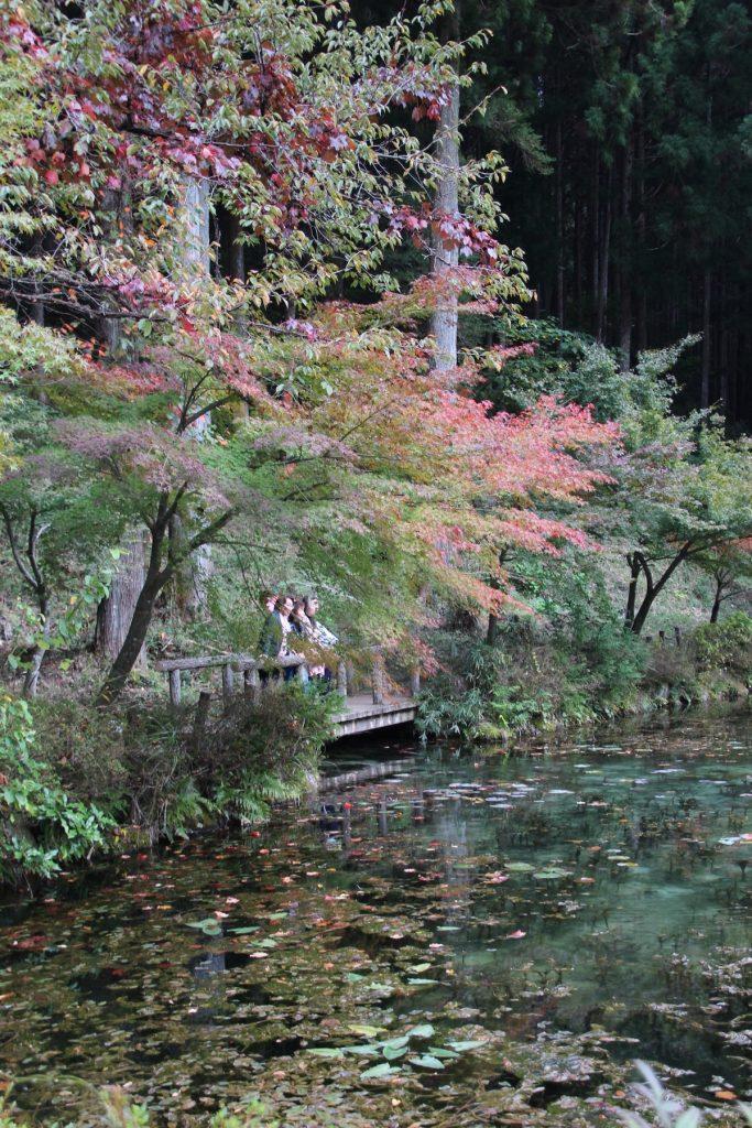 monets pond gifu japan 6