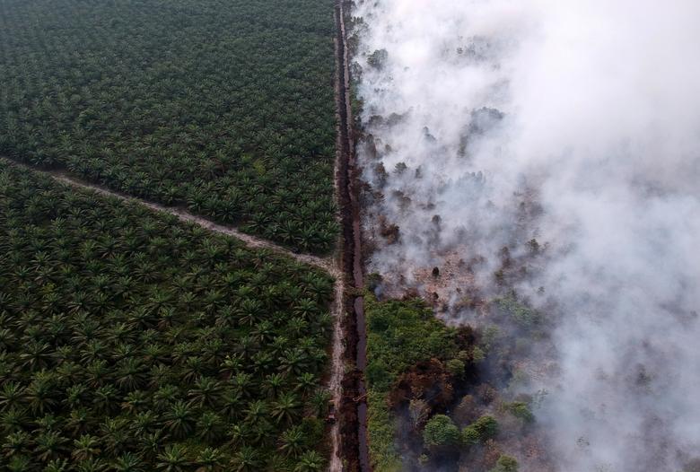 oil palm plantation Kumpeh