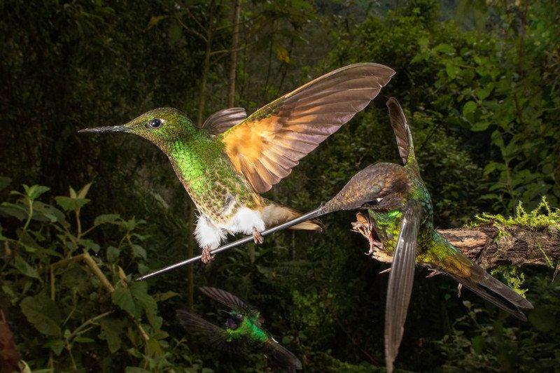 Bird Behaviour Bronze ROPEWALKER