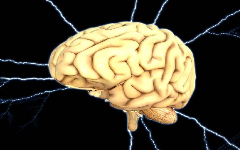 brain human2