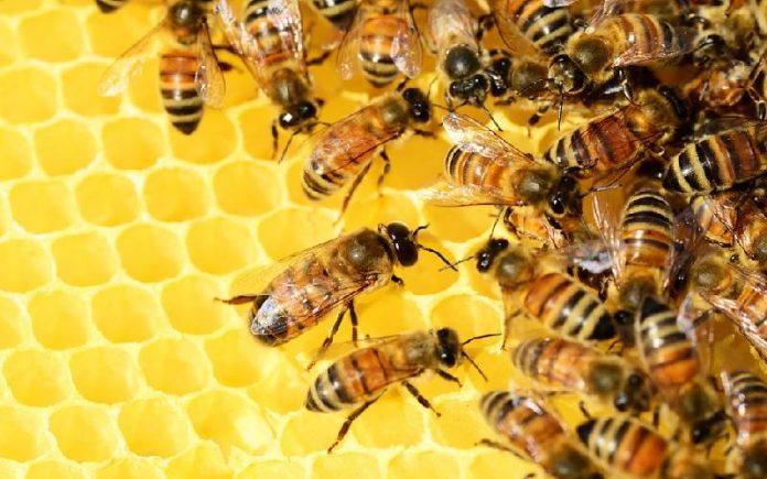 honey bee facts 1