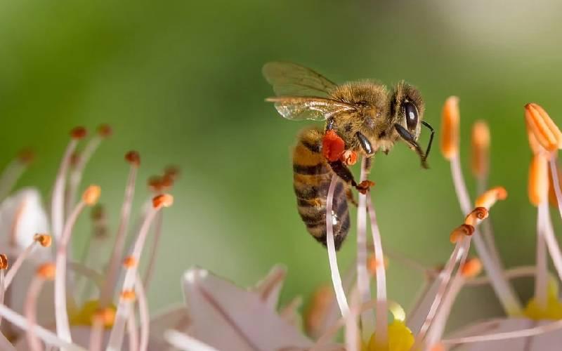 honey bee facts 2
