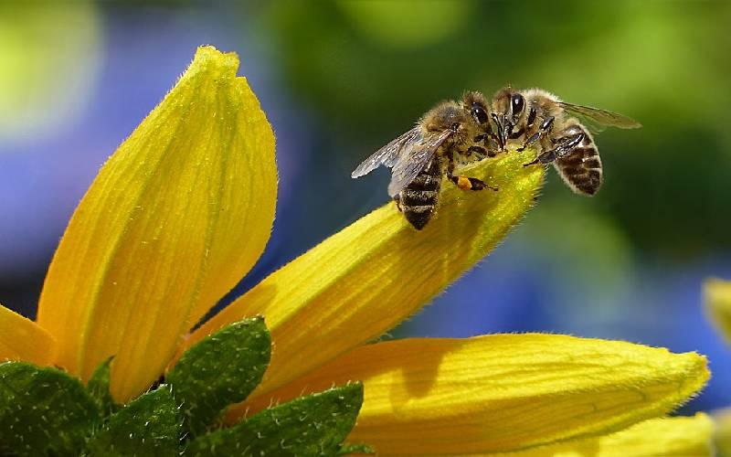 honey bee facts 4
