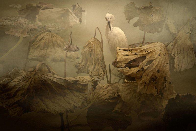 Creative Imagery Bronze Egret Egretta