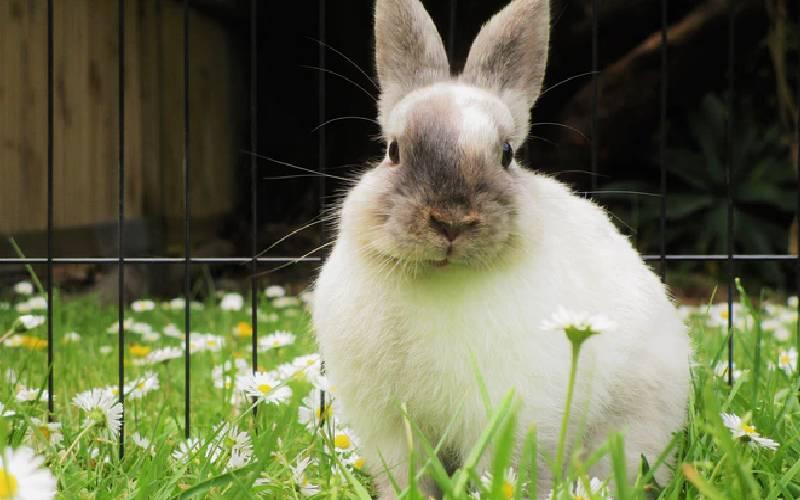 rabbit life 2