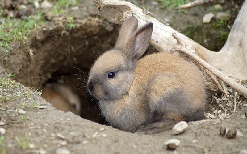 rabbit life 4