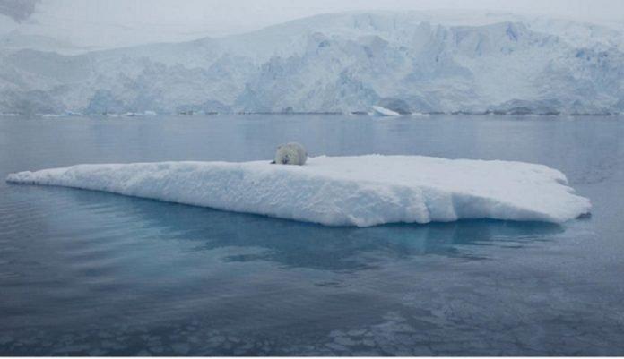 arctic 2