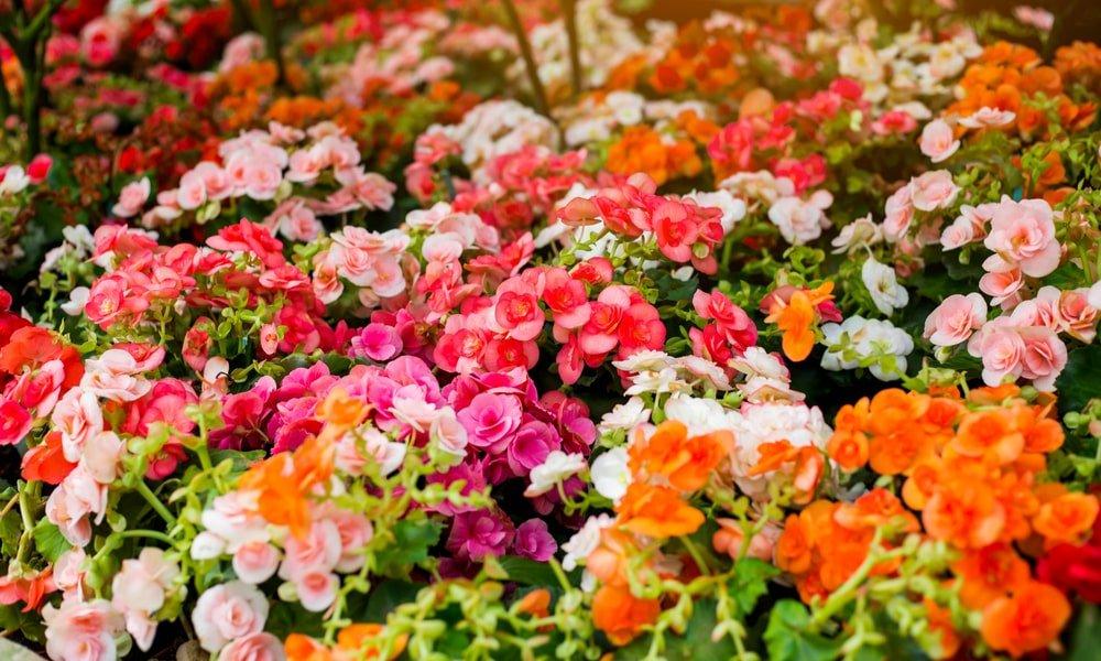 flower garden min