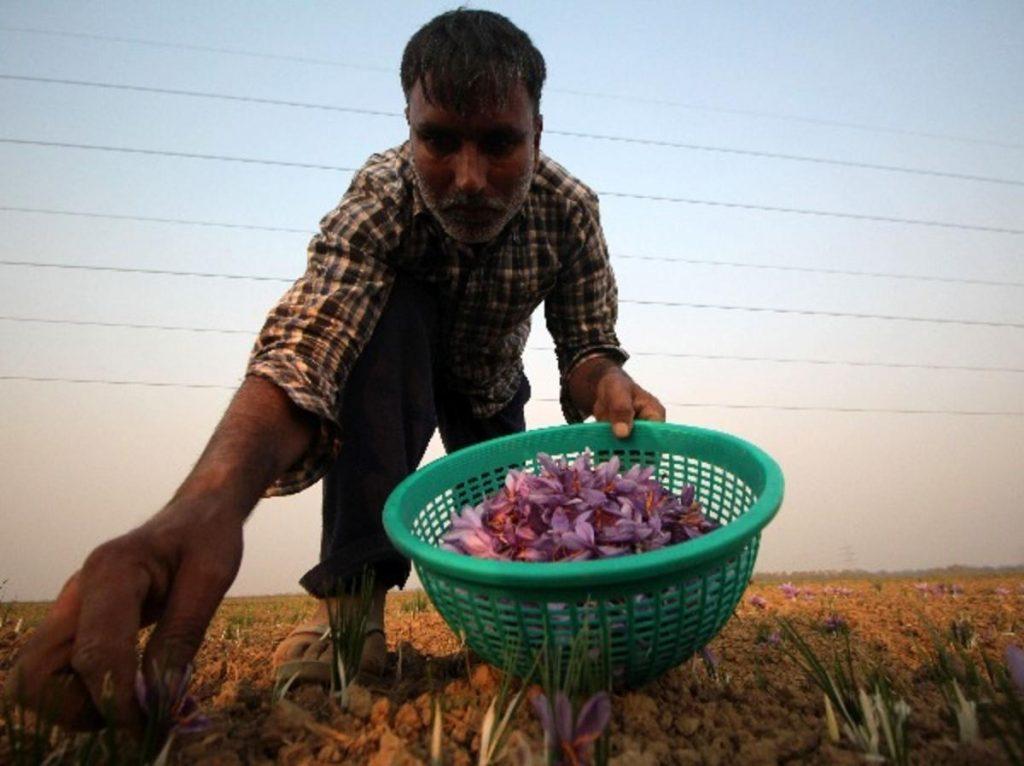 most expensive spice saffron 8 min