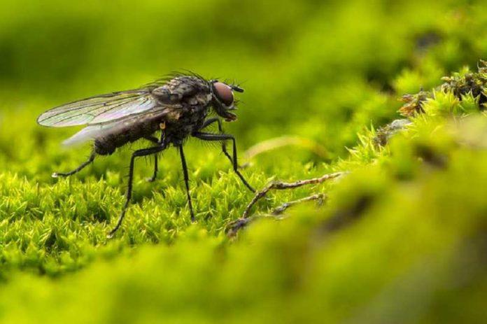 remedies to get rid flies