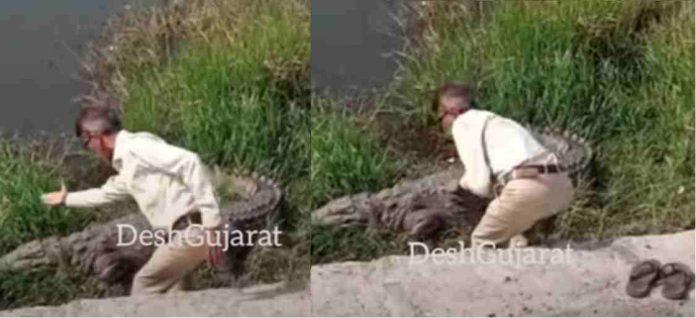 Man talking to crocodile