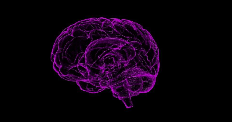 brain rebootoo1 1