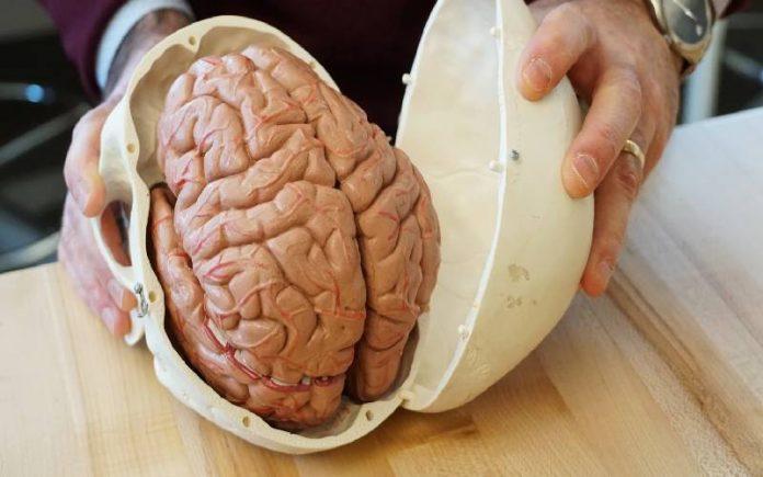 brain rebootoo3